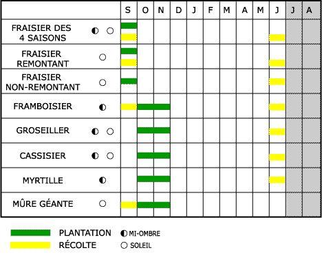 Les petits fruits calendrier de plantation et de r colte - Calendrier de plantation de legumes ...