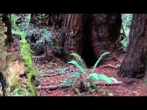 Video Nordkalifornien: Muir Woods National Monument | traveLink