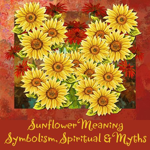 What Is The Meaning Of A Sunflower Symbolism Spiritual And Myths Meaning Of Sunflower Sunflower Illustration Sunflower