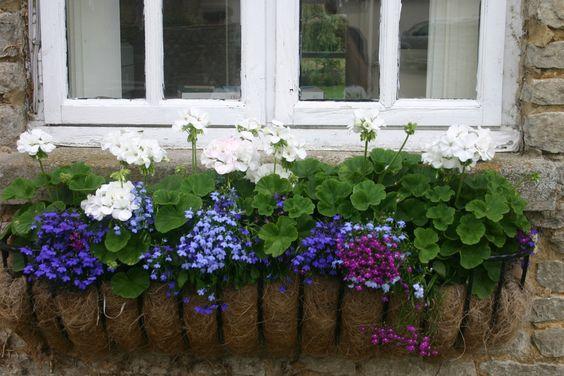Windowbox in England