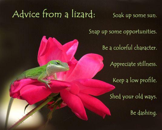 Advice from a lizard. Inspirational advice.