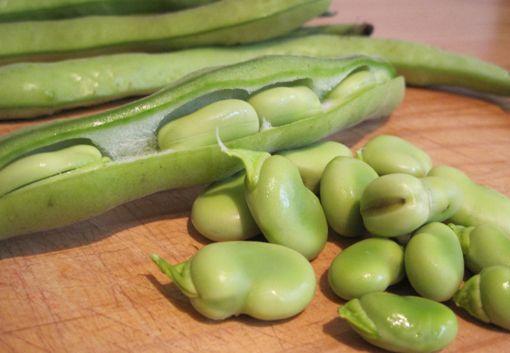 Lentil, Broad Bean and Haloumi Salad. (Add chorizo for extra fatty meaty tasty bits!)