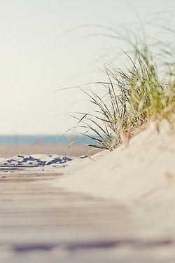 Peaceful Coastal  Windswept Boardwalk....