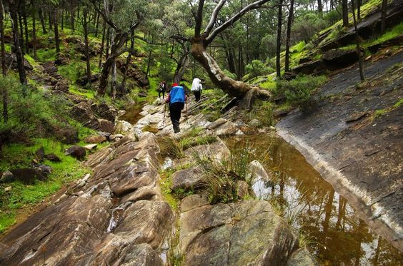 Rocky creek bed. http://bushwalk.com/forum/viewtopic.php?t=18689&p=249311