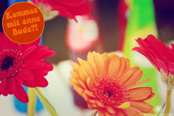 Gerbera mit Dreh&Trink by Mamlo Connection
