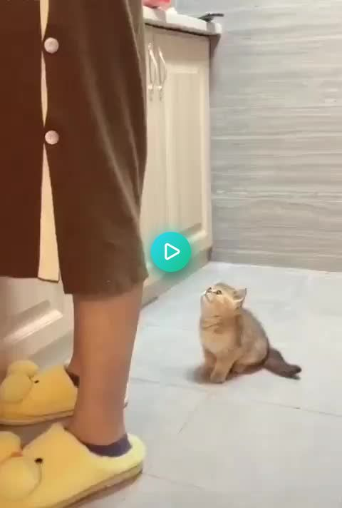 Hey Can I See What You Re Doing There Http Bit Ly 2qosehw Cute Baby Cats Cat Memes Cute Baby Animals