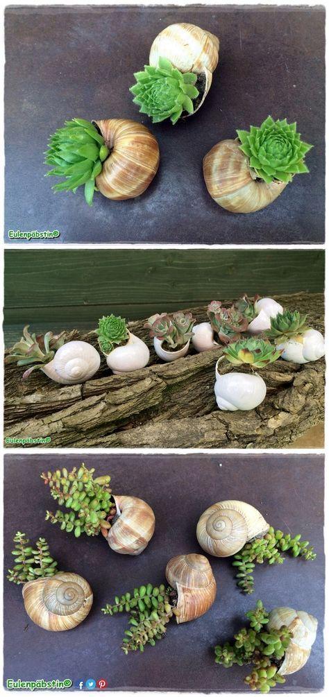 Die Anleitung für bepflanzte Schneckenhäuser mit Steinrosen findet ihr auf https://www.crazypatterns.net/de/items/13804/it-s-schnecken-time-bepflanzte-schneckenhaeuser ❤: