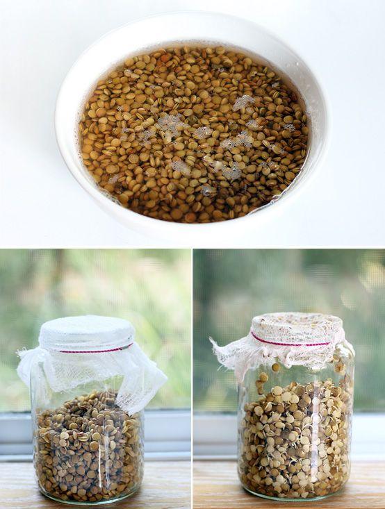 Aprovado - Receitas: Brotos e grãos germinados