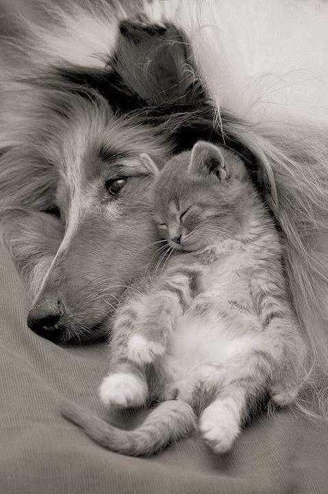 Snuggles across species.