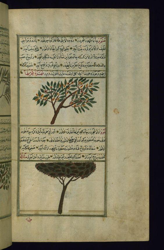 Fol 211b A Pine Tree ṣanawbar And A Terebinth Tree ḍirv Arkeoloji Isaretler