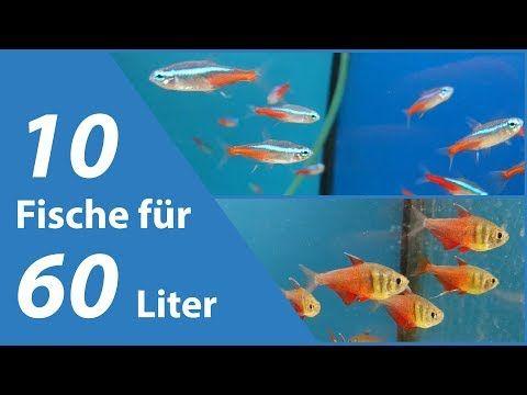 Pin Auf Aquarium Anna