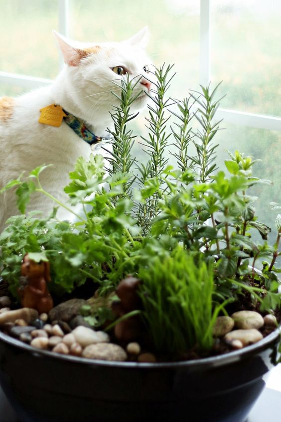 5 Plants Your Cat Might Like Just As Much As Catnip Indoor Cat Garden Cat Garden Indoor Cat