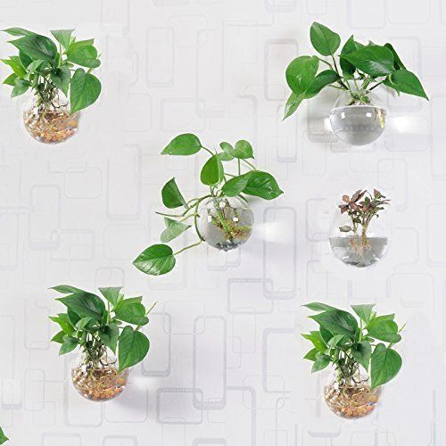 Pack Of 6 Glass Planters Wall Hanging Planters Round Glass Plant Pots Hanging Air Plant Pots Flower Vase Air Plant Terrariums Wall Hanging Plant Container 12 C Hanging Air Plants Hanging