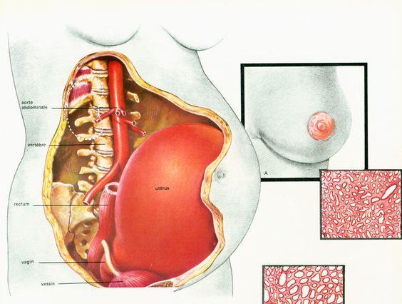 1975 Modifications métaboliques Grossesse illustration Obstétrique Gynécologie…
