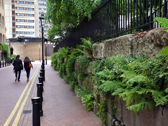 #Green #wall by St Katherine's Docks in #London with #ferns