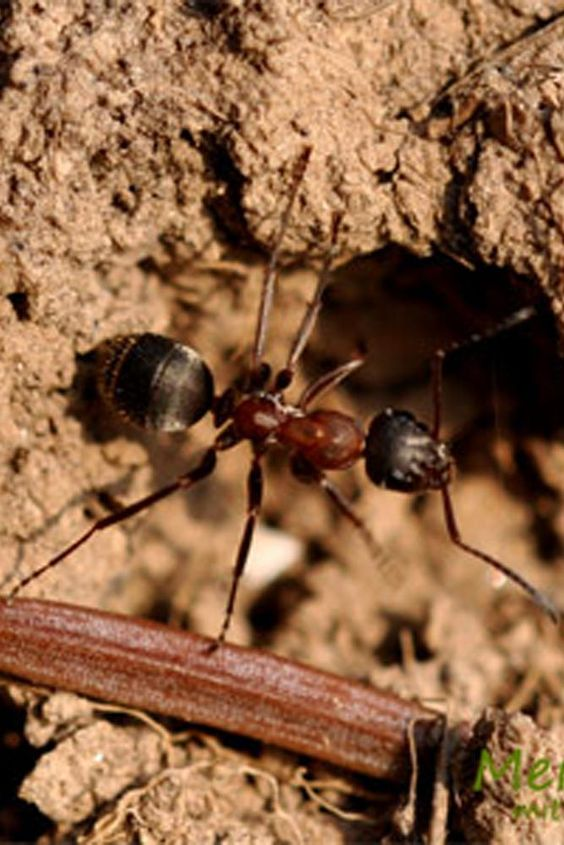 Más de 25 ideas populares sobre Hausmittel Gegen Ameisen en - hausmittel gegen ameisen in der küche