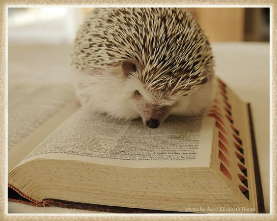 hedgehog reading dictionary via the regina monologue: