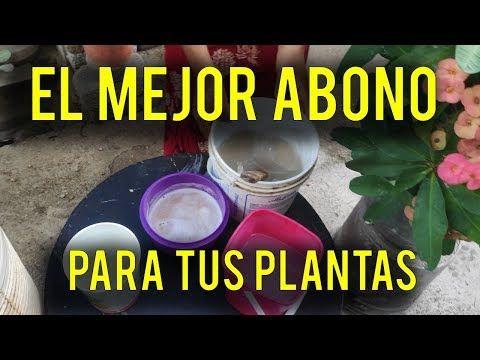 Super Abono Casero Esto Hará Que Tus Plantas Como Nunca Youtube Abono Natural Para Plantas Abonos Para Plantas Abono Casero