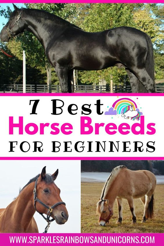 Maybe you want to lease a horse or someday buy a horse of your  own and you want a horse your beginner family or friends can ride. Or maybe your just plain curious to know what breeds are best for  beginner riders. Based on my 20 plus years experience with horses this is my top 7 horse breed choices for beginner equestrians.#beginnerhorsebreeds #calmhorsebreeds #friendlyhorsebreeds