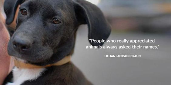 """People who really appreciated animals always asked their names.""  -Lillian Jackson Braun"