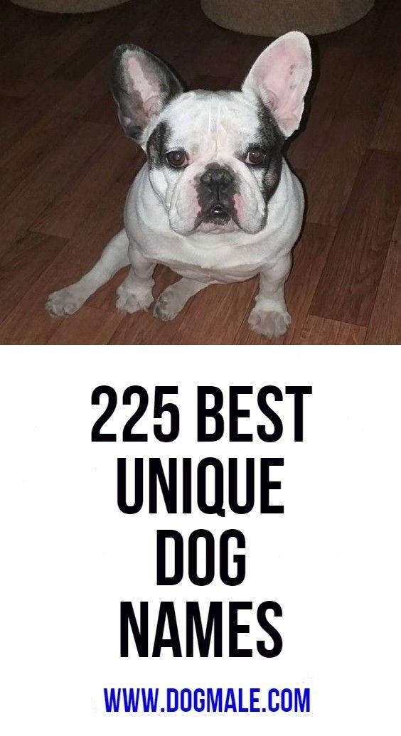 225 Best Unique Dog Names Dog Names Boy Dog Names Unique Boy