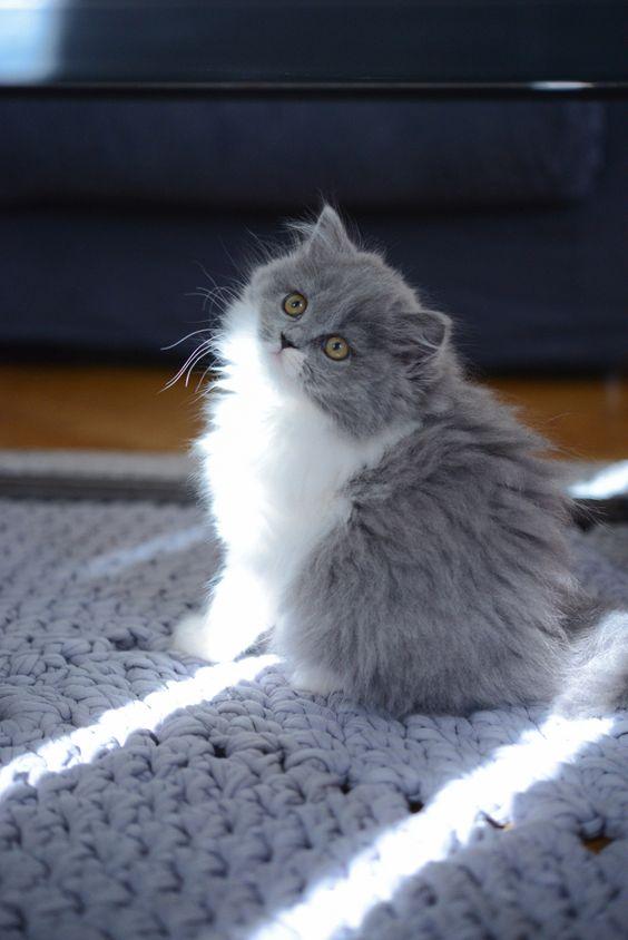 Sun, Kittens and So cute on Pinterest