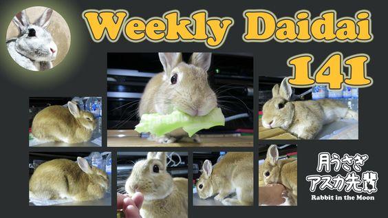 Weekly Daidai 141