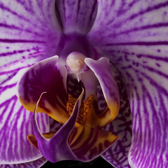 The #exotic inner world of the #orchid