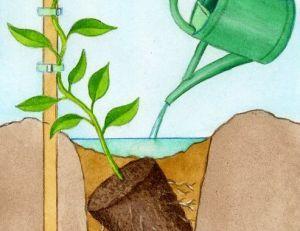 Planters on pinterest for Planter en anglais