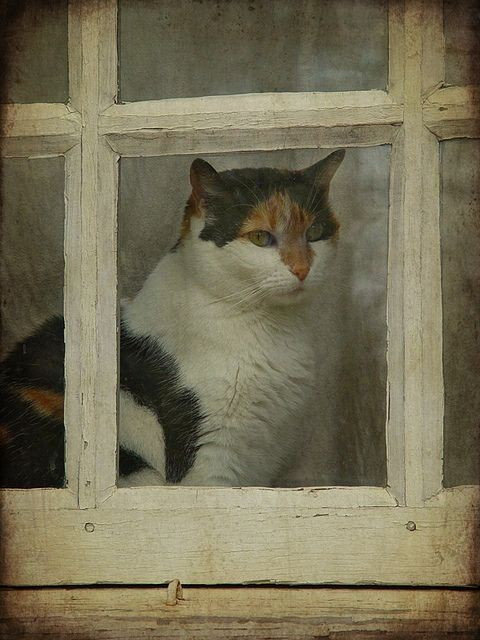 Question asian print cat looking out window opinion you