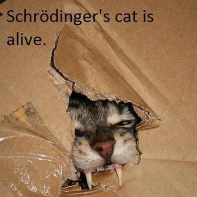 Schrödinger's cat is alive...and not happy.