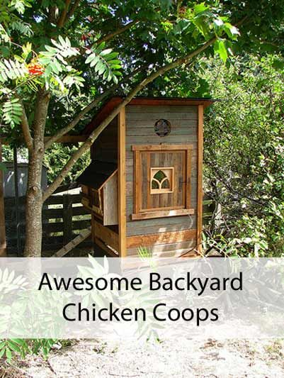 Cute Backyard Chicken Coops :  Backyard Chicken Coops  Coops, Backyard Chicken Coops and Chicken