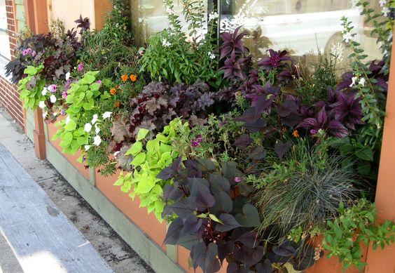 Deli window boxes