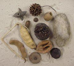 Sandy Hook's Sea Beans