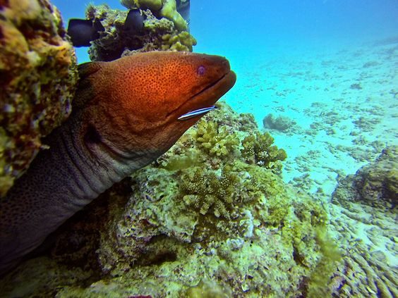One Of The Aspects That Sets Puri Asu Resort Apart From All Other Resorts In The Area Is Its Focus On Diving Puri Asu Resort Has The Only Full Dive Center In