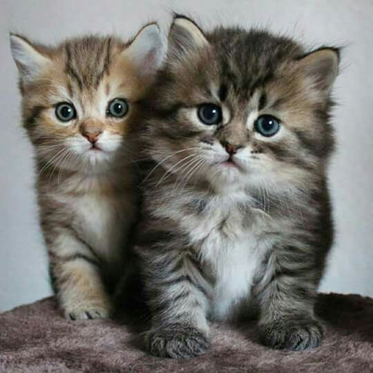 Want More Cute Cat Photos Check Out Our Website By Clicking The