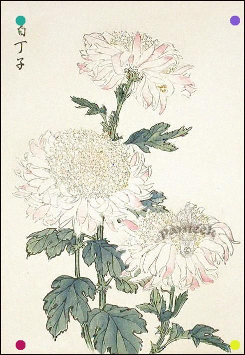 19 Japanese Woodblock Printing Art Prints Japanese Chrysanthemum