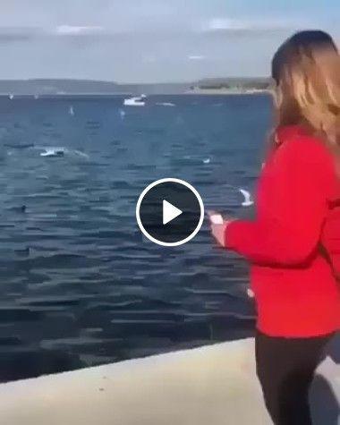 Em vez da comida mulher joga o celular na água