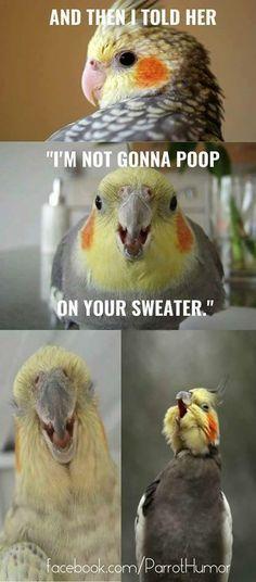 Best Funny Bird Memes Funny Bird Memes Clean Dank Bird Memes