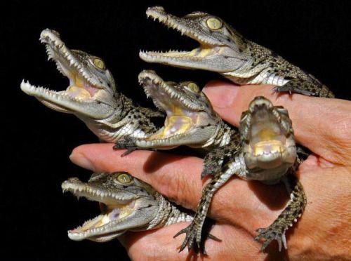 "thebabyanimals: ""Look at this beautiful blog full of baby animals! """