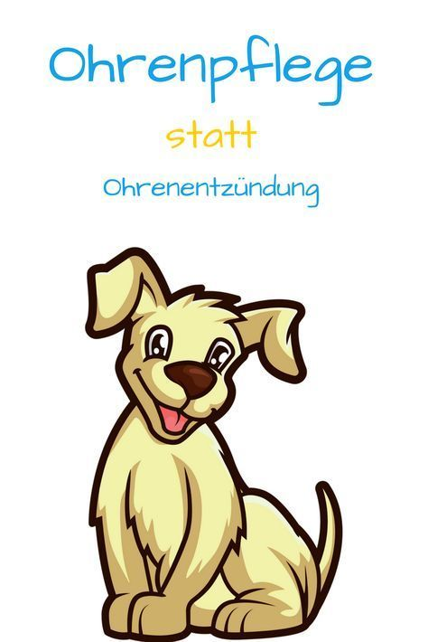 Richtige Ohrenpflege Beugt Entzundungen Vor Dogeridoo Ohrenpflege Hundegesundheit Hundepflege