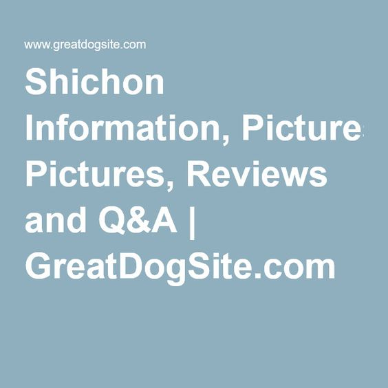 Shichon Information and Pictures - International Designer Canine ...