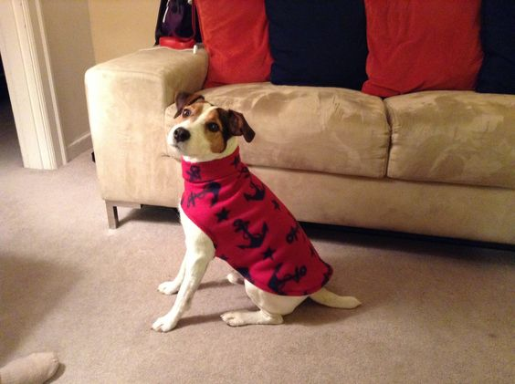 Time to make new coats for Calvin. Here's the first one of the winter season. He's a great model.   Simple to make, warm, and fits perfect.  Has a turtleneck that can be either folded down or brought up to cover his neck, if it's really cold.