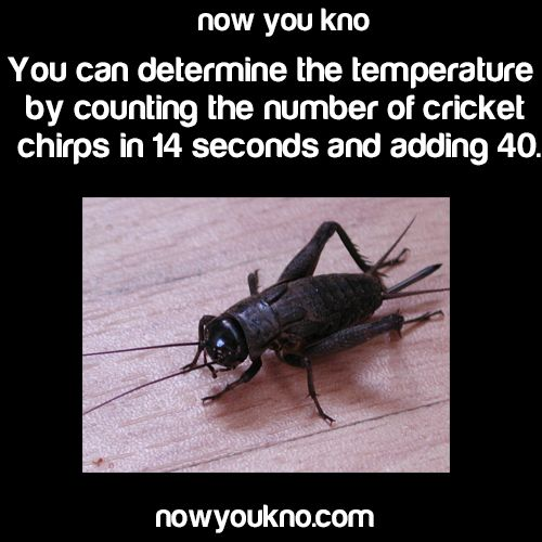 You can determine the temperature by counting the number of cricket chirps in 14 seconds and adding 40
