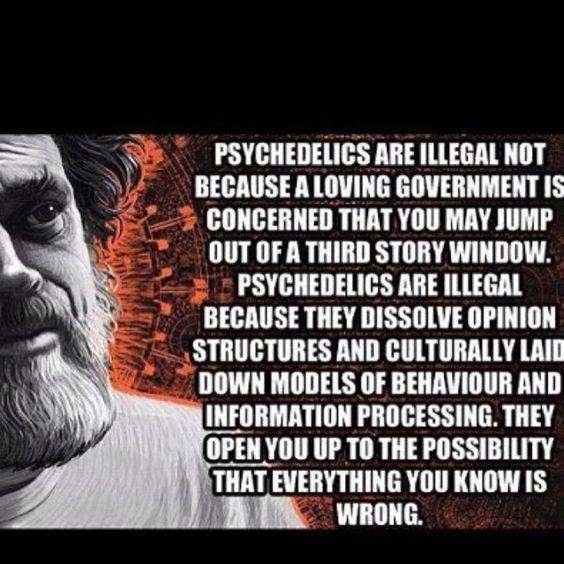 terence mckenna psychedelic society essay Terence mckenna rupert sheldrake is a biologist and author of more than 80 scientific papers and ten books a former research fellow of the royal society.
