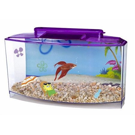 Sponge bob square pants large betta fish tank pinterest for Square fish tank
