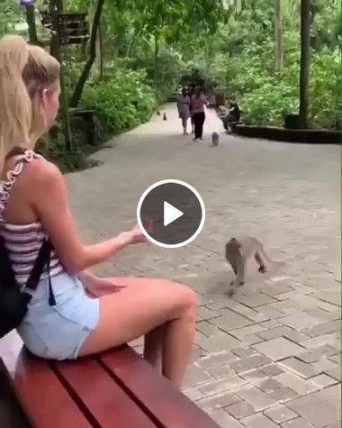 O macaco está querendo um pouco de colo