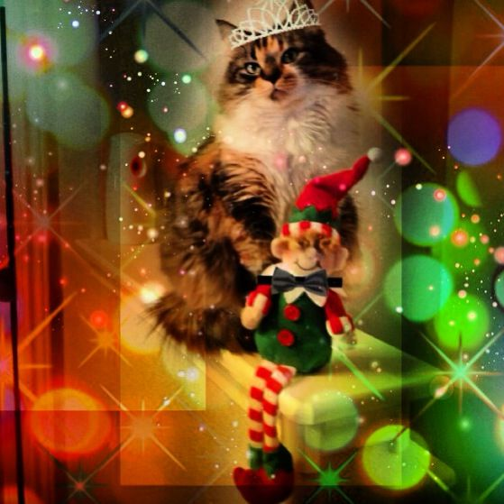 12/31/12  Elf says We're ready to party like it's 1999. Happy Mew Year!