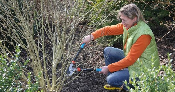 Sträucher: Sommerblüher schneiden - Mein schöner Garten