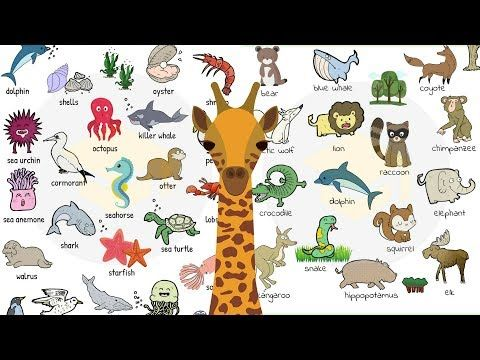 Baby Animal Names What Are The Names Of Baby Animals And Their Parents In English Learn T Animals Name In English Animals Name List Animals Name With Picture